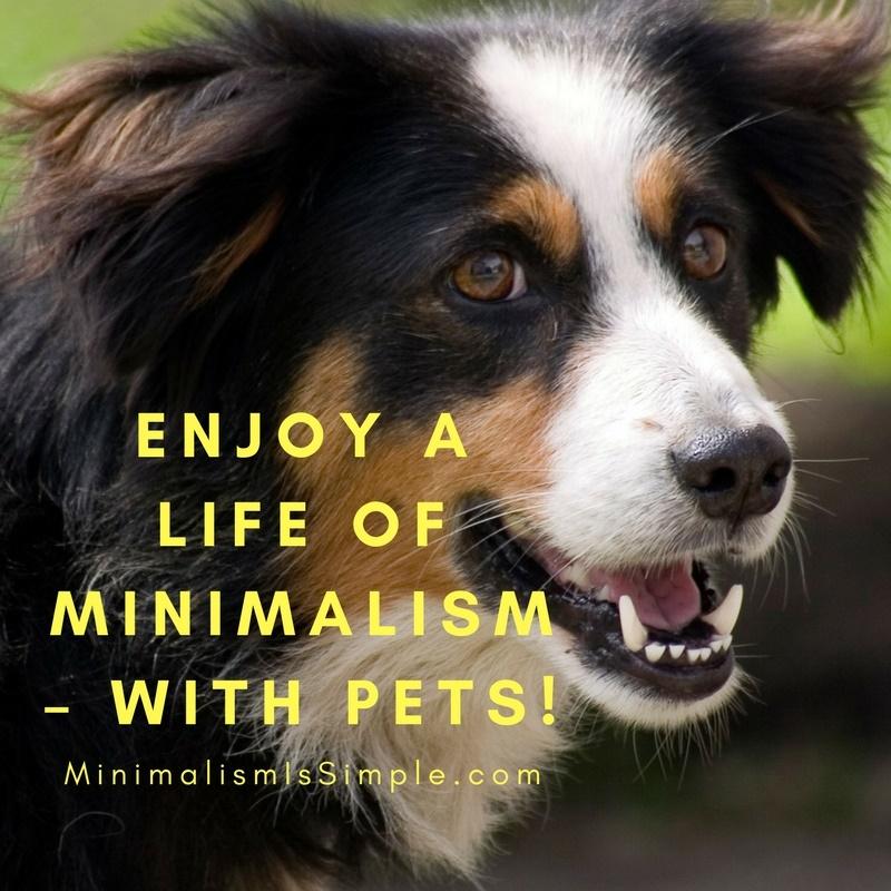 enjoy minimalist life with pets minimalismissimple