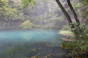 pond-300x199
